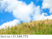 Купить «Natural summer floral background with a copy space with field and meadow flowers and herbs against a bright blue sky on a sunny day and warm good weather», фото № 31544773, снято 6 июля 2019 г. (c) Светлана Евграфова / Фотобанк Лори