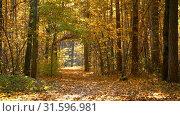 Pathway in autumn park. Стоковое видео, видеограф Sergey Borisov / Фотобанк Лори