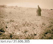 Poppy field in Transjordan. Wady Shaib near Amman, Apr. 19, 1935. 1935, Jordan (2018 год). Редакционное фото, фотограф © Liszt Collection / age Fotostock / Фотобанк Лори