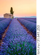 Lonely farmhouse and cypress tree in a Lavender field in bloom, sunrise with sunburst, Plateau de Valensole, Alpes-de-Haute Provence, Provence, France, Europe. Стоковое фото, фотограф ClickAlps / age Fotostock / Фотобанк Лори