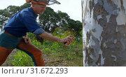 Купить «Lumberjack applying spray on tree trunk 4k», видеоролик № 31672293, снято 13 августа 2018 г. (c) Wavebreak Media / Фотобанк Лори