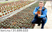 Купить «Professional gardener working with tomato seedlings in greenhouse», видеоролик № 31699033, снято 26 апреля 2019 г. (c) Яков Филимонов / Фотобанк Лори
