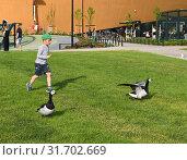 Купить «Helsinki Central Library Oodi. Little boy runs for Barnacle goose (Branta leucopsis) on grass against background of playground», фото № 31702669, снято 30 июня 2019 г. (c) Валерия Попова / Фотобанк Лори