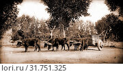 Купить «Mexican carreta, Chihuahua, Carriages & coaches, Covered wagons, Mexico, Chihuahua, 1880», фото № 31751325, снято 18 августа 2014 г. (c) age Fotostock / Фотобанк Лори