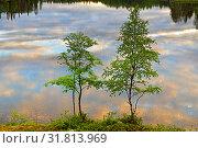 Купить «Picturesque sunset on northern lake. Rowan and birch on shore», фото № 31813969, снято 3 июля 2019 г. (c) Валерия Попова / Фотобанк Лори