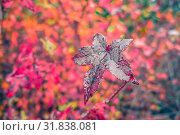 Купить «Autumn season and color changing leaves season», фото № 31838081, снято 7 июня 2020 г. (c) age Fotostock / Фотобанк Лори