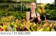 Woman florist satisfied with her dieffenbachia plants in greenhouse. Стоковое видео, видеограф Яков Филимонов / Фотобанк Лори