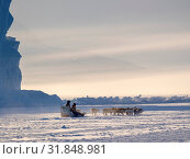 Team of sled dog during winter in Uummannaq in the north west of Greenland. Fisherman driving his dog team on the frozen fjord. North America, Greenland, Denmark. Стоковое фото, фотограф Martin Zwick / age Fotostock / Фотобанк Лори