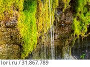 "Купить «Ecology and nature. The source of clean drinking spring water among stone rocks and moist fresh green moss. Spring ""Wailing Wall"" in the Saratov region village Gremyachka», фото № 31867789, снято 6 июля 2019 г. (c) Светлана Евграфова / Фотобанк Лори"