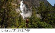 Купить «Rear view of young caucasian man hiking in dense forest on a sunny day 4k», видеоролик № 31872749, снято 16 июля 2018 г. (c) Wavebreak Media / Фотобанк Лори