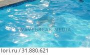 Купить «Front view of young mixed-race woman jumping in swimming pool on a sunny day 4k», видеоролик № 31880621, снято 7 ноября 2018 г. (c) Wavebreak Media / Фотобанк Лори