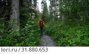 Купить «Rear view of hiker couple walking on a pathway in the dense forest 4k», видеоролик № 31880653, снято 16 июля 2018 г. (c) Wavebreak Media / Фотобанк Лори