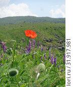 Красный мак на  фоне горной долины. Стоковое фото, фотограф Татьяна Пухова / Фотобанк Лори
