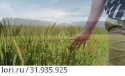 Купить «Man walking  on the field 4k», видеоролик № 31935925, снято 5 апреля 2019 г. (c) Wavebreak Media / Фотобанк Лори