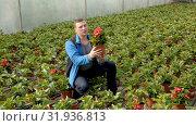 Купить «Positive male worker examining begonia seedlings while gardening in glasshouse», видеоролик № 31936813, снято 26 апреля 2019 г. (c) Яков Филимонов / Фотобанк Лори