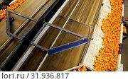 Купить «View of ripe mandarin oranges on conveyor belt of sorting production line», видеоролик № 31936817, снято 29 января 2019 г. (c) Яков Филимонов / Фотобанк Лори