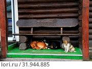Купить «Three dogs under the bench. Amusing dogs living next door. Our neighbours», фото № 31944885, снято 31 марта 2020 г. (c) age Fotostock / Фотобанк Лори