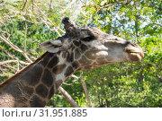 Khao Kheow Open Zoo in Pattaya (2017 год). Стоковое фото, фотограф Юлия Белоусова / Фотобанк Лори