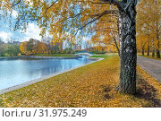 Купить «Осенний пейзаж в городском парке с березовой аллеей, водоемом и мостиком», фото № 31975249, снято 17 октября 2017 г. (c) Татьяна Белова / Фотобанк Лори