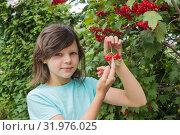 Купить «Девочка со спелыми ягодами калины. Август», фото № 31976025, снято 5 августа 2019 г. (c) Александр Романов / Фотобанк Лори