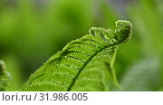 Close up fresh fern frond over green background. Стоковое видео, видеограф Anton Eine / Фотобанк Лори