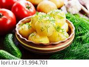 Купить «Молодой картофель с укропом», фото № 31994701, снято 28 июня 2019 г. (c) Надежда Мишкова / Фотобанк Лори