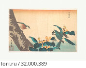 Birds and Flowers, Edo period (1615–1868), Japan, Polychrome woodblock print, ink and color on paper, H. 14 3/16 in. (36 cm), W. 8 13/16 in. (22.4 cm), Prints, Keisai Eisen (Japanese, 1790–1848) (2017 год). Редакционное фото, фотограф © Copyright Artokoloro Quint Lox Limited / age Fotostock / Фотобанк Лори