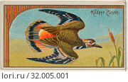 Купить «Kildeer Plover, from the Game Birds series (N13) for Allen & Ginter Cigarettes Brands, 1889, Commercial color lithograph, Sheet: 1 1/2 x 2 3/4 in. (3.8...», фото № 32005001, снято 27 апреля 2017 г. (c) age Fotostock / Фотобанк Лори