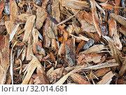 Купить «Rough pieces of forest pine bark background closeup», фото № 32014681, снято 3 июля 2020 г. (c) easy Fotostock / Фотобанк Лори