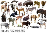 Купить «Collage with African mammals and birds», фото № 32016757, снято 22 августа 2019 г. (c) Яков Филимонов / Фотобанк Лори