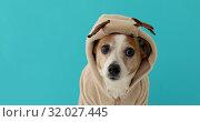 Купить «Dog wearing christmas deer costume», видеоролик № 32027445, снято 15 августа 2019 г. (c) Ekaterina Demidova / Фотобанк Лори