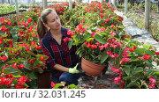 Купить «Young female florist arranging potted plants of flowering red begonias while gardening in glasshouse», видеоролик № 32031245, снято 3 июня 2019 г. (c) Яков Филимонов / Фотобанк Лори