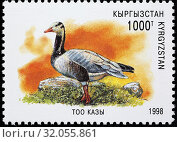 Купить «Bar-headed Goose, Anser indicus, postage stamp, Kyrgyzstan, 1998.», фото № 32055861, снято 14 сентября 2013 г. (c) age Fotostock / Фотобанк Лори