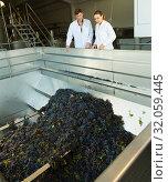 Купить «Workers of winery discussing manufacturing process», фото № 32059445, снято 13 сентября 2018 г. (c) Яков Филимонов / Фотобанк Лори