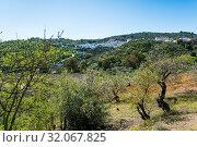 Guaro, Málaga, Andalusia, Spain, Europe. Стоковое фото, фотограф José Luis Hidalgo Salguero / easy Fotostock / Фотобанк Лори