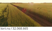 Купить «Aerial view on young boy, that rides a bicycle thru a wheat grass field on the old rural road. Sunlight and beams.», видеоролик № 32068665, снято 3 мая 2019 г. (c) Александр Маркин / Фотобанк Лори