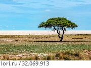 Nature, Landscape, Namibia, Tasha, Pan. Стоковое фото, фотограф Lukas Schwab / age Fotostock / Фотобанк Лори