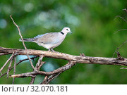 Nature, Wild, Bird, Namibia, Tasha, Стоковое фото, фотограф Lukas Schwab / age Fotostock / Фотобанк Лори