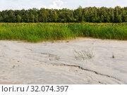 Купить «Bottom of a drained swamp with cattail and forest in the background», фото № 32074397, снято 10 августа 2019 г. (c) Евгений Харитонов / Фотобанк Лори