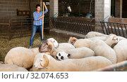 Купить «Woman working in sheep stall», фото № 32074653, снято 17 ноября 2019 г. (c) Яков Филимонов / Фотобанк Лори
