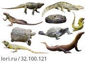 Купить «collection of reptiles», фото № 32100121, снято 20 октября 2019 г. (c) Яков Филимонов / Фотобанк Лори
