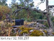 Купить «An open black laptop stands on old stones in a dense forest.», фото № 32100297, снято 9 сентября 2017 г. (c) Акиньшин Владимир / Фотобанк Лори