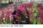 Купить «Portrait of florist woman working in sunny greenhouse full of blooming plants», видеоролик № 32105553, снято 3 июня 2019 г. (c) Яков Филимонов / Фотобанк Лори