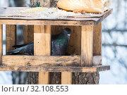 Купить «Сизый голубь в самодельной кормушке на дереве в Электростальском лесу», эксклюзивное фото № 32108553, снято 9 марта 2019 г. (c) Кузин Алексей / Фотобанк Лори