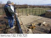 """Купить «Люди в парке львов """"Тайган"""" смотрят вниз на стаю львов», фото № 32110721, снято 10 марта 2019 г. (c) Наталья Гармашева / Фотобанк Лори"""