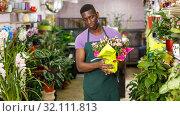 Купить «Man in apron checking potted plants», фото № 32111813, снято 14 февраля 2019 г. (c) Яков Филимонов / Фотобанк Лори