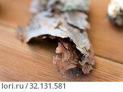Купить «close up of pine tree bark on wooden background», фото № 32131581, снято 13 сентября 2018 г. (c) Syda Productions / Фотобанк Лори