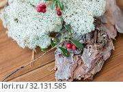 Купить «close up of cowberry and reindeer lichen moss», фото № 32131585, снято 13 сентября 2018 г. (c) Syda Productions / Фотобанк Лори