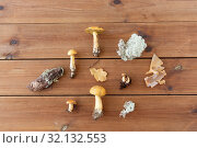 Купить «edible mushrooms, moss and pine bark on wood», фото № 32132553, снято 13 сентября 2018 г. (c) Syda Productions / Фотобанк Лори
