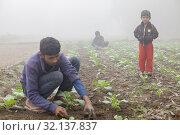 Купить «Bangladesh - November 25, 2014: A young boy and his little sister in winter morning while working in her family cauliflower vegetable garden in Ranisankail, Thakurgaon, Rangpur.», фото № 32137837, снято 25 ноября 2014 г. (c) age Fotostock / Фотобанк Лори